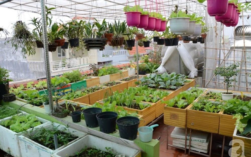 chống thấm sân thượng để trồng cây